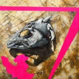 A Fish Skull From Ventura And Magenta Sayak Mitra